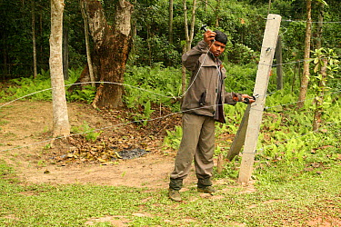 Man mending damage to elephant fence, designed to protect agricultural crops from being eaten Indian Elephants (Elephas maximus) sometimes break through and come into conflict with humans India Novemb...  -  Vivek Menon/ npl