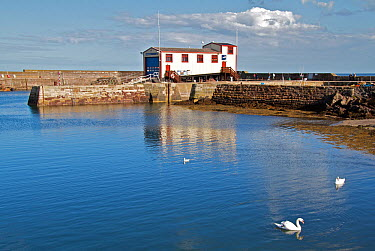 Harbour and lifeboat station at St Abbs, Scotland  -  Elaine Whiteford/ npl