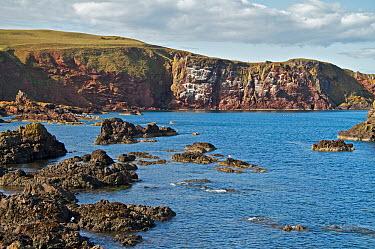 A calm North Sea outside St Abbs harbour, Scotland  -  Elaine Whiteford/ npl