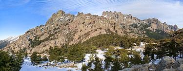 Panoramic view of Corsican Black Pine forest (Pinus nigra laricio corsicanus) Col de Bavella and Aiguilles de Bavella mountains, Parc Naturel Regional de Corse, Corsica island, France, February 2010  -  Angelo Gandolfi/ npl