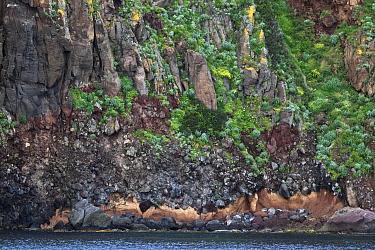 Rugged and colourful coast showing geological strata and erosion Capraia island, National Park of the Tuscany archipelago, Italy, May 2010  -  Angelo Gandolfi/ npl
