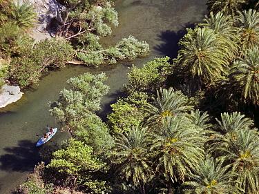 Aerial view of people kayaking on the river Megalos Potamos, between the endemic Cretan palm trees (Phoenix theophrasti) Crete, Greece  -  Angelo Gandolfi/ npl