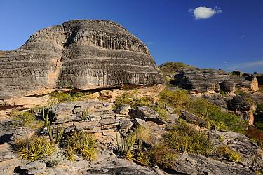 Bromeliads (Encholirium spectabile) and Xique-xiquecactus on sedimentary conglomerate rocks (on top of hills) and eroded sandstone (bottom) in Serra da Capivara National Park, municipality of Sao Raim...  -  Luiz Claudio Marigo/ npl