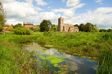 Yarkhill Moat; a Great Crested Newt (Triturus cristatus) breeding site, with the Yarkhill Court and the church in the background, Herefordshire, England, UK, May 2010  -  Will Watson/ npl