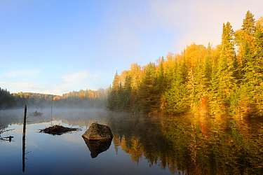 Mist and autumn coloured tress at Bouchard lake La Mauricie National Park, Quebec, Canada, October 2010  -  Eric Baccega/ npl