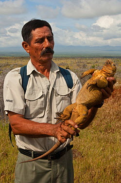 Land iguana (Conolophus subcristatus) held by warden at ruins of USA military base, Baltra Island, Galapagos Islands, born on the island from re-introduced parents April 2008  -  Pete Oxford/ npl