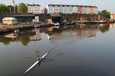 Rower with terrace of colourful houses on Redcliffe Quay beyond, reflected in the water of Bristol's floating Harbour in early morning, Bristol, England, May 2008  -  Toby Roxburgh/ npl