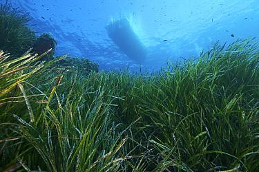 View through Neptune grass (Posidonia oceanica) to underside of boat on surface Capraia, Tuscany, Italy, August  -  Roberto Rinaldi/ npl