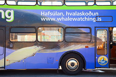 Advertisment for whale watching tours on the side of a bus Reykjavik, Iceland, July 2009  -  Juan Carlos Munoz/ npl