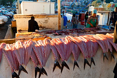 Filleted fish laid out in the fishing village of Kalk Bay, False Bay, South Africa  -  Juan Carlos Munoz/ npl