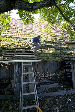 Man repairing the roof of a barn, part of a traditional peasant village economy Romania, October 2010  -  David Woodfall/ npl