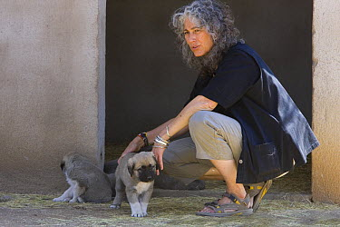 Dr Laurie Marker with Anatolian Shepherd Dog puppies, (Cheetah conservationists currently use Anatolian shepherds to protect livestock from cheetah attack) Cheetah Conservation Fund, Namibia  -  Suzi Eszterhas/ npl