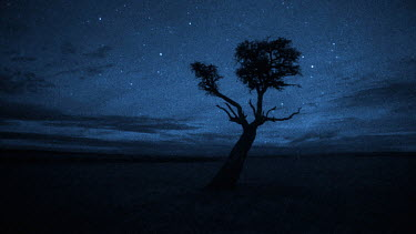 Starry night, Masai Mara, Kenya Imagetaken using starlight camera technology without artificial light  -  Martin Dohrn/ npl