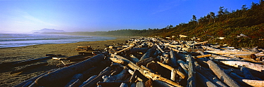 Driftwood on a beach with the coastline stretching to the horizon Wickaninnish Beach, Pacific Rim National Park Reserve, West coast of Vancouver Island, Canada, September 2010  -  Matthew Maran/ npl