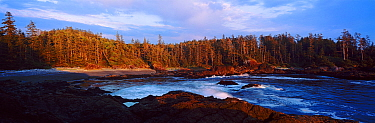 A view of a forested inlet lit by low sunlight Aggro Beach, west coast of Vancouver Island, Canada, September 2010  -  Matthew Maran/ npl