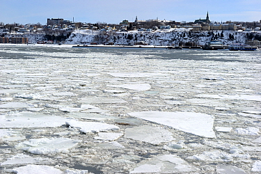 Ice floe melting along the shore of St Lawrence River Levis, Quebec, Canada, January 2009  -  Eric Baccega/ npl