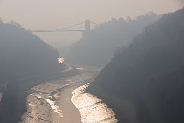 Avon Gorge, Leigh Woods and the Clifton Suspension Bridge in mist, Bristol, UK, January 2009  -  Steve Nicholls/ npl