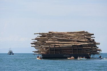 A barge full of logs Illegal timber is brought into Sarawak from Kalimantan by both land and sea Illegal logging in protected areas involves a complex network of people from all walks of life The ille...  -  Jurgen Freund/ npl