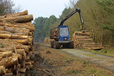 Forestry workers with forwarder machine, removing felled timber from Dunwich Forest, Suffolk, UK, February 2011 Non-native Corsican pine trees planted in 1990 are gradually being removed by the Forest...  -  Chris Gomersall/ 2020V/ npl