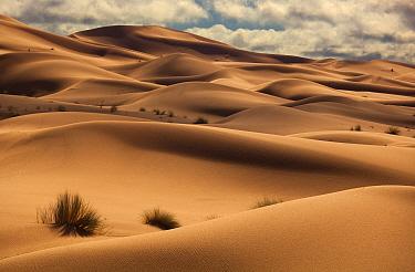 Erg Chebbi Dunes, Sahara Desert, Morocco, North Africa, March 2011  -  Ernie Janes/ npl
