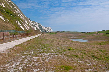 Samphire Hoe Nature Reserve, created from spoil dug from the Channel Tunnel Home to Early Spider Orchids Dover, Kent, UK, April  -  Adrian Davies/ npl