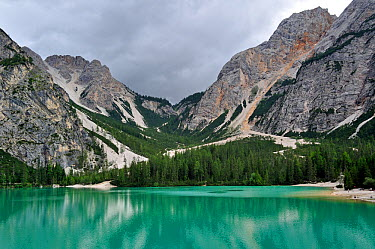Pine trees and mountains surrounding the lake Lago di Braies, Pragser Wildsee in the Dolomites, Italy July 2010  -  Philippe Clement/ npl