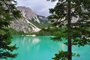 Pine trees and mountains surrounding the turquoise water of lake Lago di Braies, Pragser Wildsee in the Dolomites, Italy July 2010  -  Philippe Clement/ npl