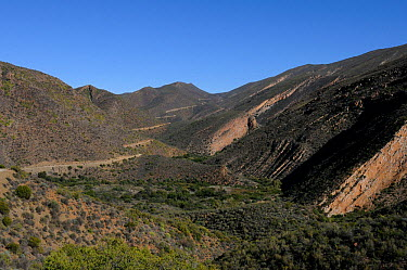 The road to 'die hel', 'The Hell' Swartberg Nature Reserve, Western Cape, South Africa, April, 2011  -  Tony Phelps/ npl