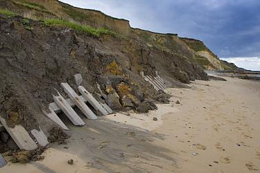 Crumbling cliffs caused by coastal erosion, Overstrand, Norfolk, UK, September  -  Ernie Janes/ npl