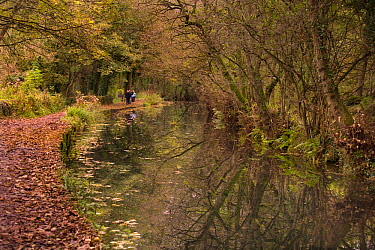 People walking along towpath beside the Cromford Canal, Derbyshire, UK, in autumn  -  Ernie Janes/ npl