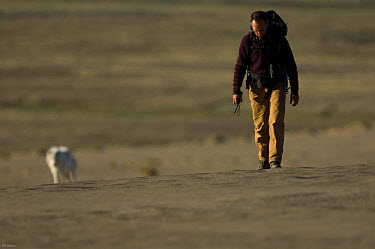 Cameraman Mark Smith near to an Arctic wolf (Canis lupus) whilst filming wolves for Frozen Planet, Ellesmere Island, Nunavut, Canada, June 2008 Taken on location for BBC series, Frozen Planet, Summer  -  Jeff Wilson/ npl