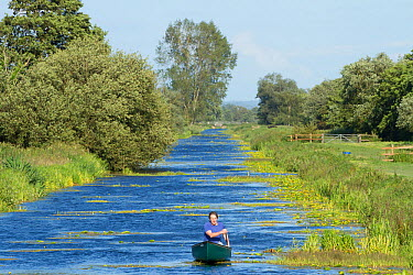Man in canoe on North Drain, Tadham Moor, Wedmore, Somerset Levels, Somerset, England, UK, June 2011  -  Guy Edwardes/ 2020V/ npl