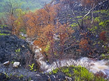 Mountain stream flowing through fire-damaged landscape, near Lochinver, Coigach, Assynt SWT, Sutherland, Highlands, Scotland, UK, June 2011  -  Joe Cornish/ 2020V/ npl