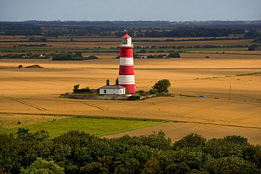 Lighthouse in the middle of farmland, Happisburgh, Norfolk, UK  -  Ernie Janes/ npl