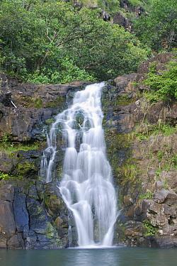 Waimea Valley, Waimea Falls Oahu, Hawaii, February 2011  -  Rob Tilley/ npl