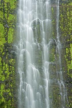 Waimoku Falls Drops (over 400 feet) in the Kipahlu Valley Maui, Hawaii, February 2011  -  Rob Tilley/ npl