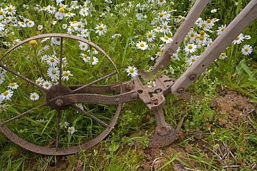Traditional farm equipment, old hoe for digging up beet, Norfolk, UK  -  Ernie Janes/ npl