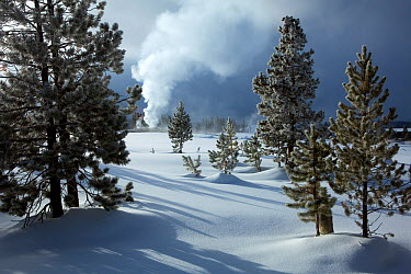 Winter landscape in the Geyser Hill area withOld Faithful erupting in the background, Yellowstone National Park, Wyoming, USA, February 2011  -  Kirkendall-spring/ npl