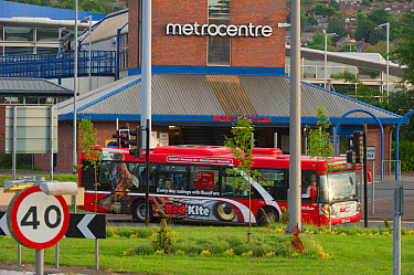 Red Kite bus passing the Metrocentre in the Urban Red Kite area of the Derwent Valley, Gateshead, Tyne and Wear, UK, on the edge of Tyneside following on from the 'Northern Kites' re-introduction prog...  -  Rob Jordan/ 2020V/ npl
