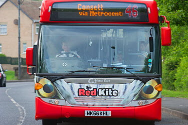 Red Kite bus in the Urban Red Kite area of the Derwent Valley, Gateshead, Tyne and Wear, UK, on the edge of Tyneside following on from the 'Northern Kites' re-introduction programme between 2004-2007...  -  Rob Jordan/ 2020V/ npl