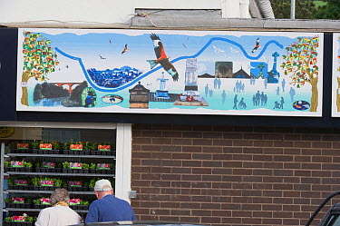 Red Kite mural in the Urban Red Kite area of the Derwent Valley, Gateshead, Tyne and Wear, UK, on the edge of Tyneside following on from the 'Northern Kites' re-introduction programme between 2004-200...  -  Rob Jordan/ 2020V/ npl