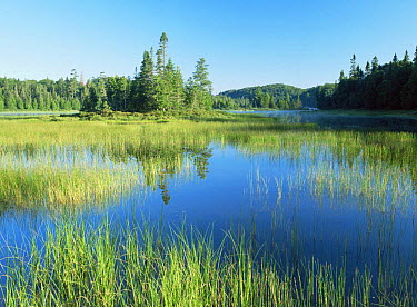 Morning light on Crescent Lake, Lake Superior National Park, Ontario, Canada  -  Thomas Lazar/ npl
