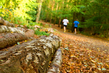 Men jogging along a path through woodland, with logs in the foreground, Beacon Hill Country Park, The National Forest, Leicestershire, UK, October 2011  -  Ben Hall/ 2020V/ npl