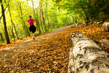 Woman jogging along a path though woodland, with log in the foreground, Beacon Hill Country Park, The National Forest, Leicestershire, UK, October 2011  -  Ben Hall/ 2020V/ npl