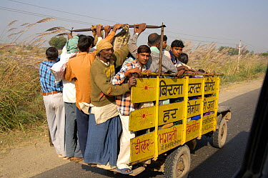 Typical rural transport, overloaded van with people, Maharashtra, India  -  Michael W. Richards/ npl