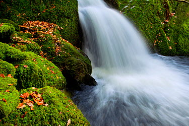 Water running into pool at the base of a waterfall, Stock Ghyll, Lake District NP, Cumbria, England, UK, November  -  Ben Hall/ 2020V/ npl