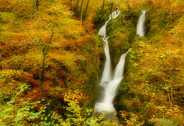 Stock Ghyll waterfall in autumn, with motion blur from wind, Lake District NP, Cumbria, England, UK, November  -  Ben Hall/ 2020V/ npl
