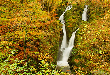 Stock Ghyll waterfall in autumn, Lake District NP, Cumbria, England, UK, November  -  Ben Hall/ 2020V/ npl