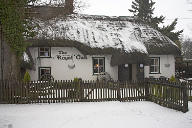 The Royal Oak public house in snow, North Gorley, New Forest National Park, Hampshire, UK, February 2009  -  Mike Read/ npl