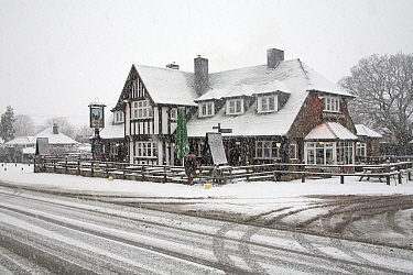 The Fighting Cocks public house during heavy snow shower, Godshill, New Forest National Park, Hampshire, UK, February 2009  -  Mike Read/ npl
